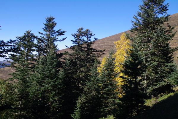 Couleurs d_automne dans la Sapinière de Berne