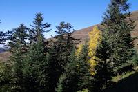 Couleurs d'automne dans la Sapiniere de Berne