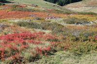 Les myrtillers roussissent sous le Mont Ne
