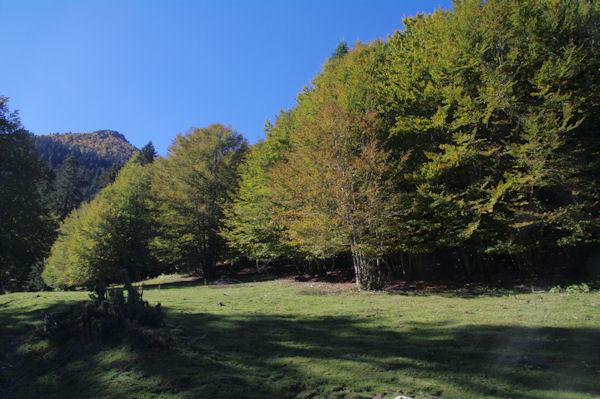 Des feuillus au bord de la Sapinière de Rieu Mousserau