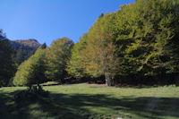 Des feuillus au bord de la Sapiniere de Rieu Mousserau