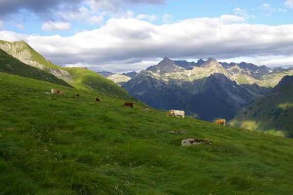 Un troupeau en estive sous le Pic de Mousquès