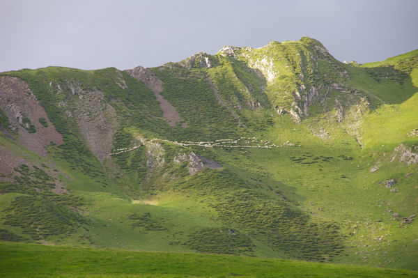Un chapelet de moutons sous le Pic de Ralhoun