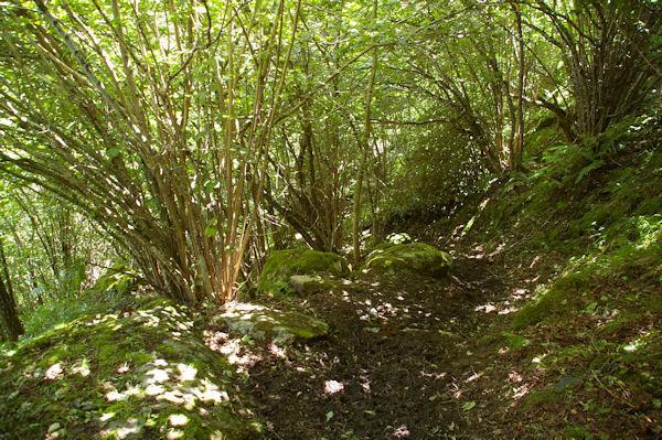 Le chemin au dessus du Pont d_Ourey