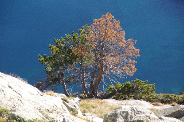 Contrastes de couleurs en remontant la Montagne des Laquettes vers les crêtes de Barris d_Aubert