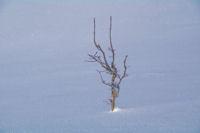 Nudite hivernale