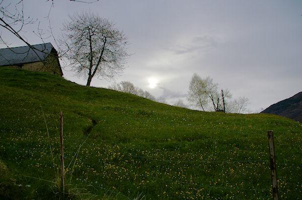 Une jolie prairie de printemps en montant au dessus d_Arcizans Dessus
