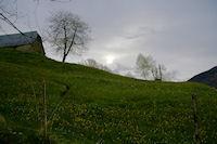 Une jolie prairie de printemps en montant au dessus d'Arcizans Dessus