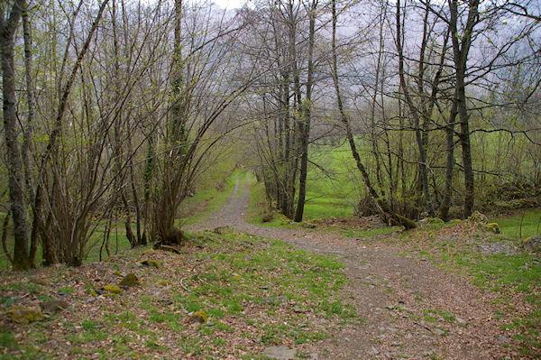 Un joli chemin arboré au dessus de Gaillagos
