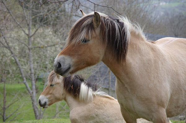 A Gaillagos même les chevaux ont le sourire!