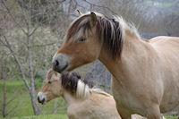 A Gaillagos meme les chevaux ont le sourire!