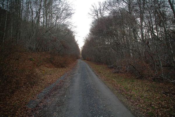 La route du Col de Liar dans le Bois d_Arragnat