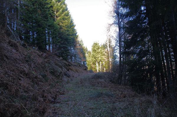 La forêt sous le Pic d_Arragnat