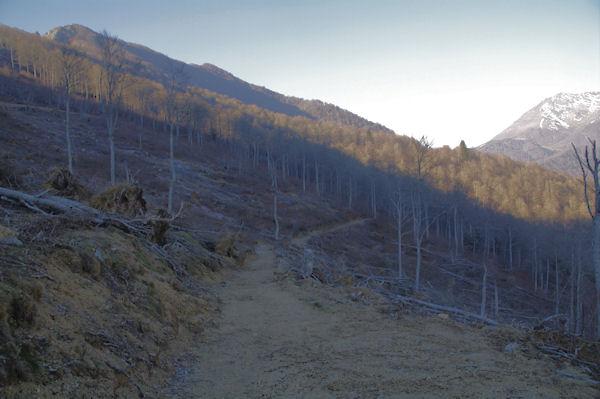 Le Bois d_Arragnat dévasté