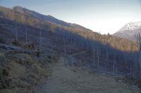 Le Bois d'Arragnat devaste
