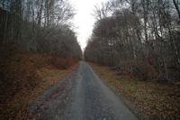 La route du Col de Liar dans le Bois d'Arragnat