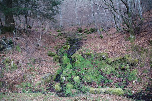 Dans le Bois d_Arragnat