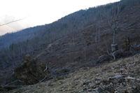 Les degats de Xynthia dans le bois d'Arragnat