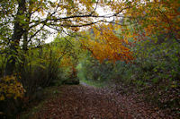 Le chemin de l&#39Arboretum a Arrens