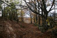 Le Bois de Lesterie