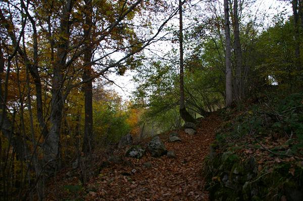 Le chemin arboré coupant 2 lacets de la route montant au Col des Bordères