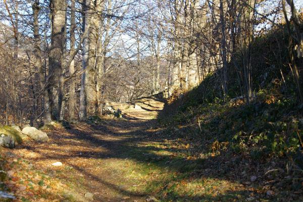 Le chemin arboré menant au Pic de Pan à Lesterle