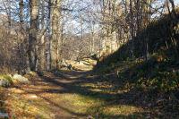 Le chemin arbore menant au Pic de Pan a Lesterle