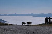 Moutons en estive au Col de Portet