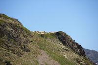 Des moutons vers le Pic des Monges