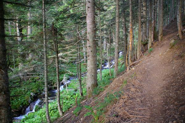 Le chemin dans les sapins au dessus du ruisseau de la Lie vers l_Ayouassa