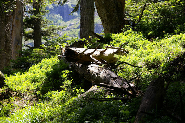 Dans le bois sous la Mouic, en descendant vers le Plaa d_Aste