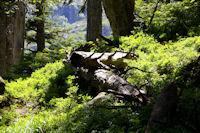 Dans le bois sous la Mouic, en descendant vers le Plaa d'Aste