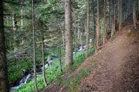 Le chemin dans les sapins au dessus du ruisseau de la Lie vers l'Ayouassa