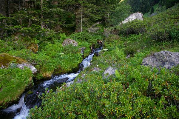 Le ruisseau de la Lie vers l_Ayouassa