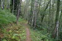 Le sentier de l'Arboretum d'Arrens
