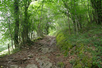Le chemin arbore montant a l'Arboretum d'Arrens