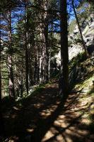Le sentier menant aux Laquettes dans la pinede de Loste