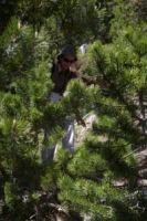 Marie Francoise au milieu des pins vers la Fontaine de l'Ermite