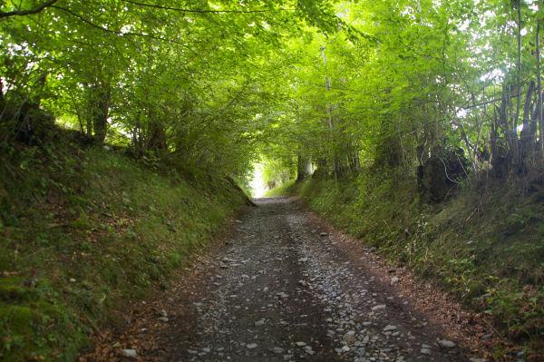 Le chemin ombragé de la Reine Hortense