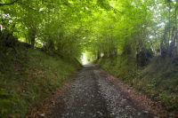 Le chemin ombrage de la Reine Hortense