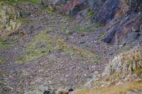 Harde d'isards sous le Petit Pic de Tapou