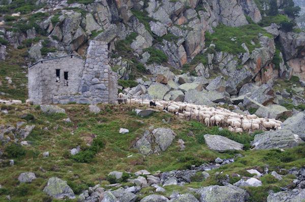 Des moutons rassemblé devant la grange au dessus du Lac de la Glère