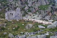 Des moutons rassemble devant la grange au dessus du Lac de la Glere