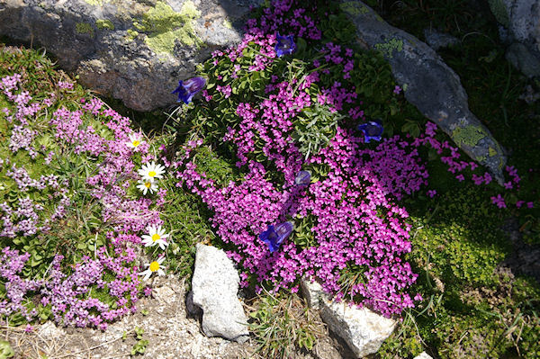 Festival de fleurs colorées!