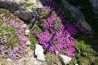 Festival de fleurs colorees!