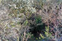 L'Igue de Plana Greze