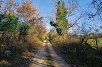 Le joli chemin remontant vers le Roc Traucat