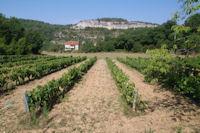Des vignes a Sarrou