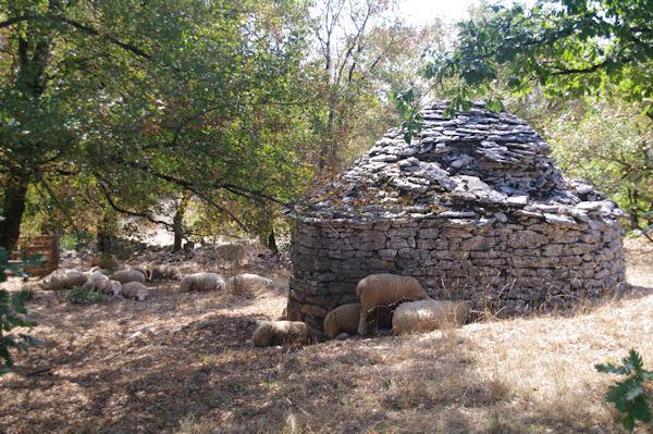 Une cazelle servant d_abri pour les moutons vers St Chels