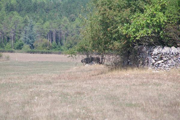 Un dolmen en descendant vers la Combe de Ravié
